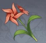 chrysantheme-a-aubes