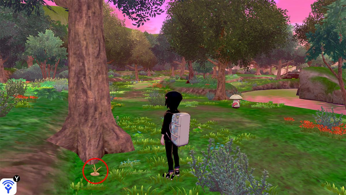pokemon Ile solitaire de l'Armure emplacement Taupiqueur Forêt Flexion