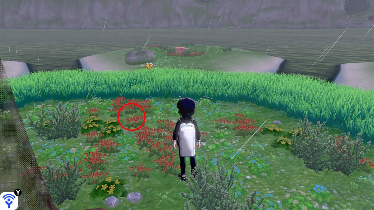 pokemon Ile solitaire de l'Armure emplacement Taupiqueur Îlot Calméole