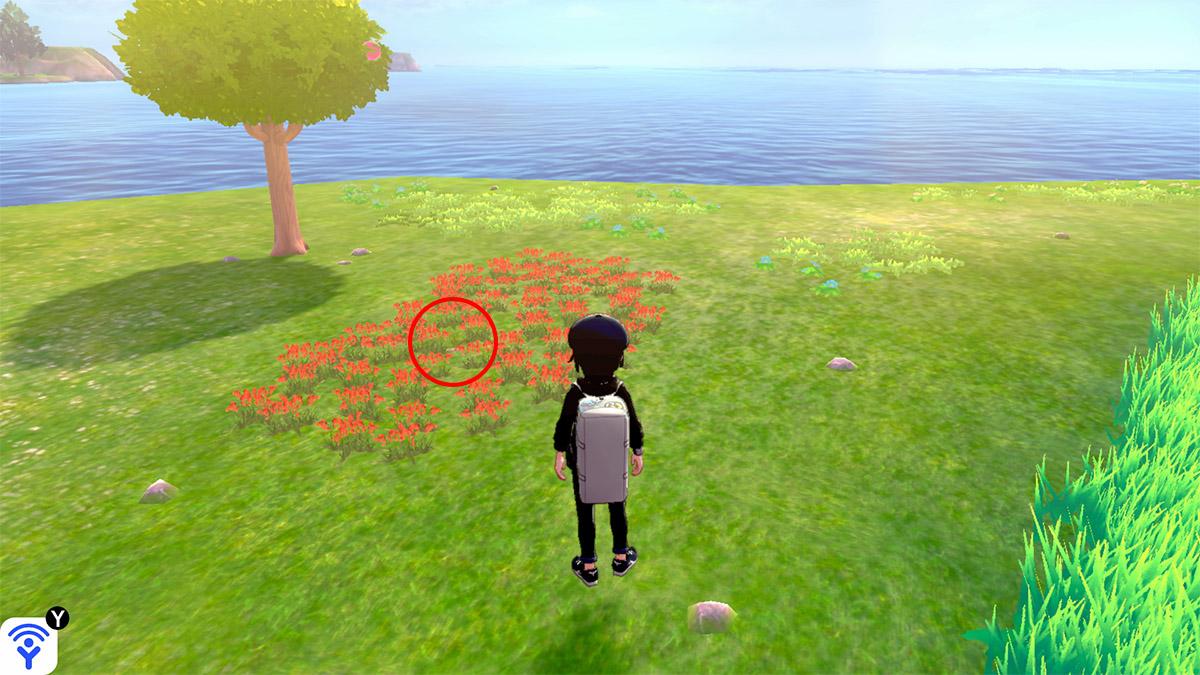 pokemon Ile solitaire de l'Armure emplacement Taupiqueur Mer Isol'Îlots
